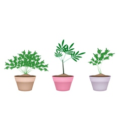 Green parsley plant in ceramic flower pots vector