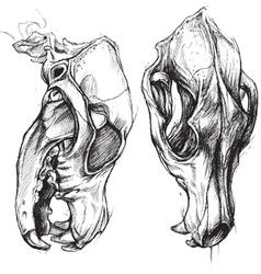Dog skull vector