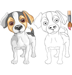 Coloring Book of Jack Russell Terrier vector image vector image