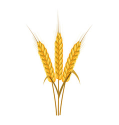 Spikelets of wheat icon cartoon style vector