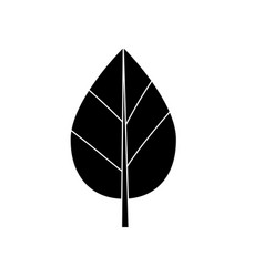 Contour natural leaf botany of tropical plant vector