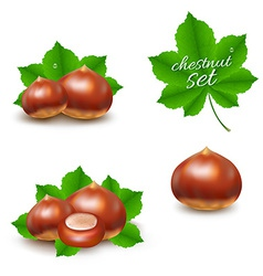 Chestnuts Set vector image