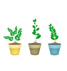 Fresh moringa tree in ceramic flower pots vector
