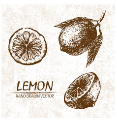 digital detailed lemon hand drawn vector image vector image
