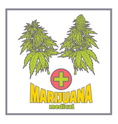 bushes of marijuana medica flat vector image