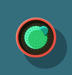 Top view a cactus in flat style vector