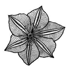 Flower 209 14 vector