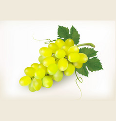 green grapes fruit isolated on white background vector image