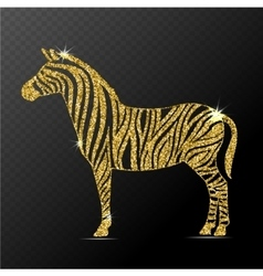 Zebra isolated vector