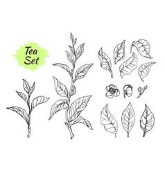 Tea set 3 vector