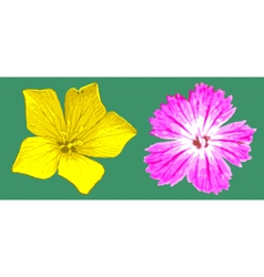 Yellow and magenta flowers vector