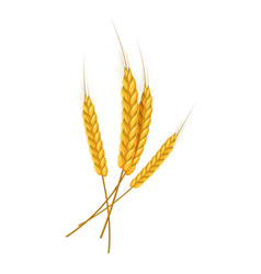 Four wheat ears icon cartoon style vector