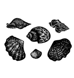 Vintage hand drawn collection of various seashells vector