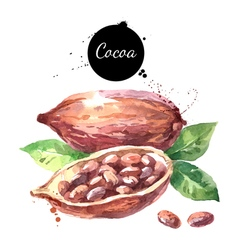 Watercolor hand drawn cocoa pod Isolated organic vector image