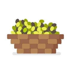 Wooden basket with olives isolated on white vector