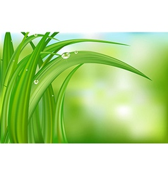 Green background with grass vector