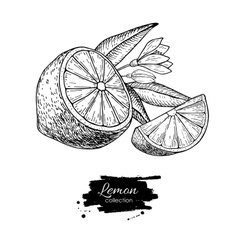 hand drawn lemon or lime fruit with flower vector image