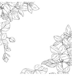 plant in blossom branch with flower ink sketch on vector image vector image