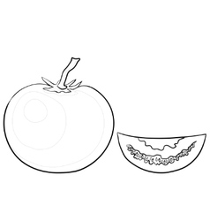 tomato and segment contours vector image