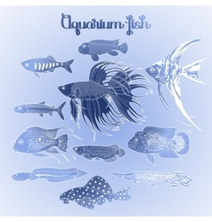Graphic aquarium fish set vector