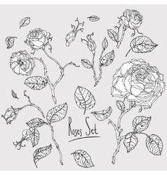 Hand drawn wild roses set vector