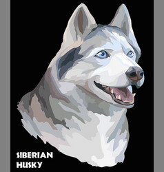Colorful portrait of siberian husky vector