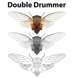 double drummer in three sketches vector image vector image