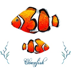 Clownfish vector