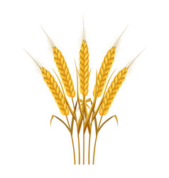 Five wheat ears icon cartoon style vector