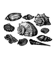 vintage hand drawn collection of various seashells vector image