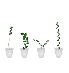 A set of creeper plant in flower pot vector