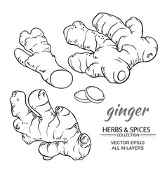 ginger set vector image