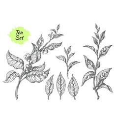 tea hatching set vector image vector image