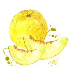 Watercolor melon summer hand drawn fruit vector