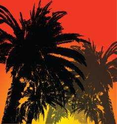 palm tree silhouette vector image vector image