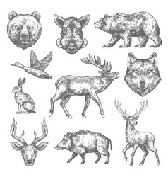 sketch wild animal icons for hunting or zoo vector image vector image