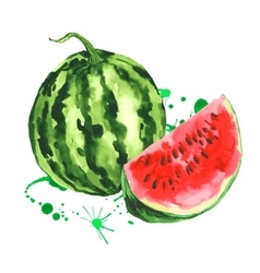 Watercolor watermelon summer hand drawn fruit vector image