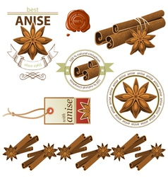 cinnamon and anise vector image vector image