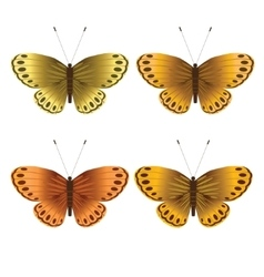 Collection of gold butterflies vector