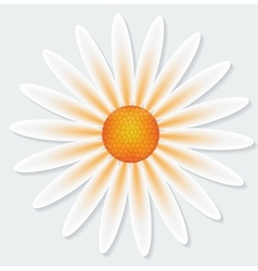 Camomile flower on gray background vector image vector image