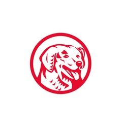 Kuvasz dog head circle retro vector