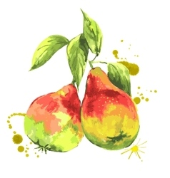 Watercolor pears summer hand drawn fruit vector