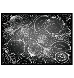 Hand drawn of guava and indian gooseberry on chalk vector