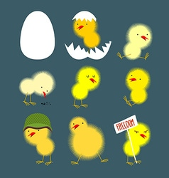 Set of yellow chicks white egg and chicken Chick vector image vector image