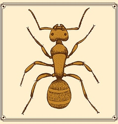 Sketch cute ant in vintage style vector