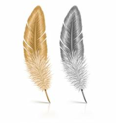 feather isolated on white background vector image vector image