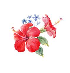 Watercolor hibiscus composition vector