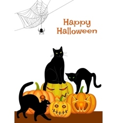 Webs black cat and pumpkins vector