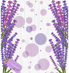 lavender flower on white wood texture background vector image