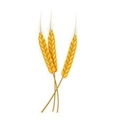 Three ears of wheat icon cartoon style vector